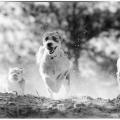 Vier Hunde laufen um die Wette.Schwarzweiss.