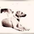 Zwei Hunde während einer Spielpause im Sand liegend und stehend.Schwarzweiss.